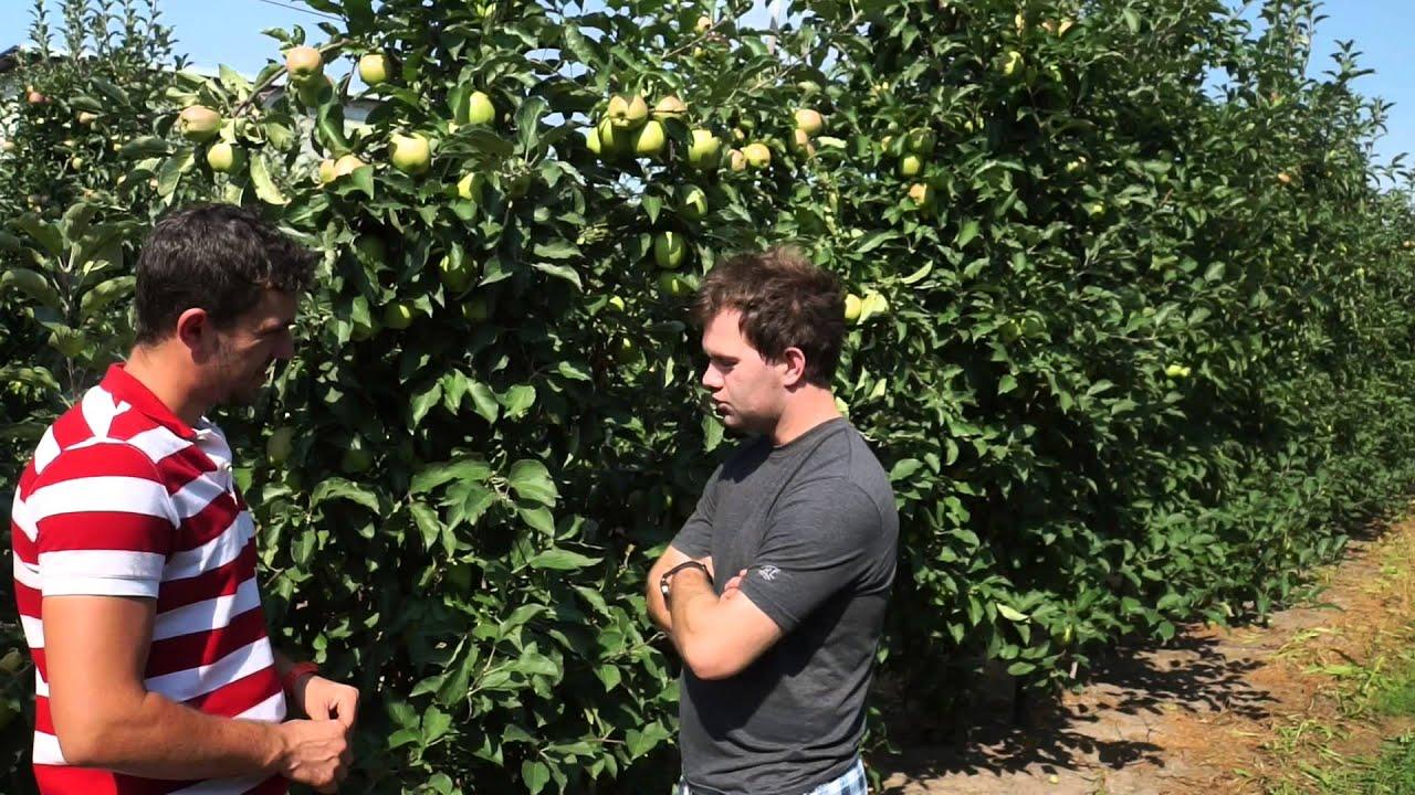 forum sadownicze, uprawa jabłek, nawożenie doglebowe, wapń w roślinach dowiedz się o co chodzi, nawożenie azotowe, potas