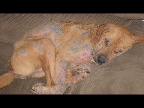 How To Treat A Dog Rash At Home