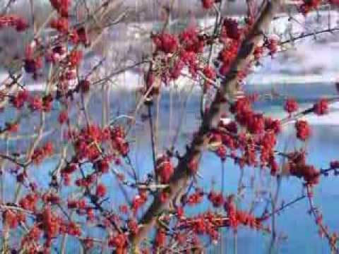 Saskatoon in the Winter