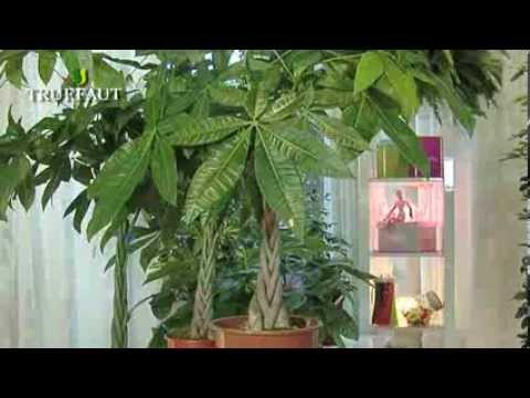 Plante d 39 interieur la choisir et l 39 entretenir youtube for Plante interieur verte