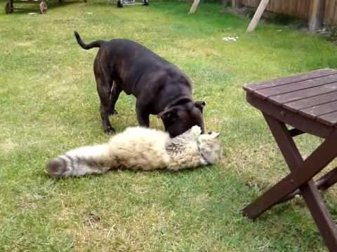 Dog Vs Cat Fighting