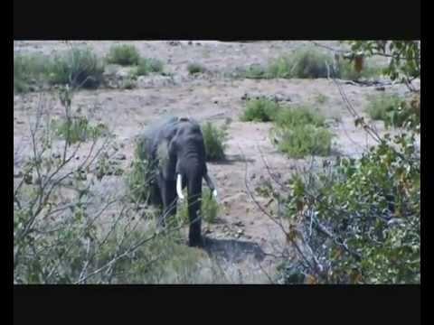 Video over San parks, de nationale parken van Zuid Afrika