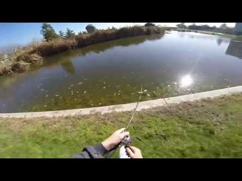 POND BASS FISHING IN CALIFORNIA