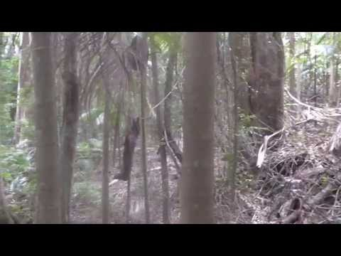 Rain Forest Research - Setting Up New Location 2