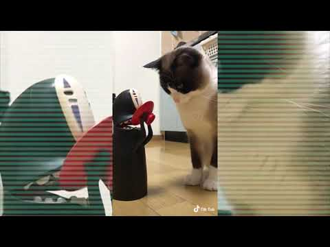 Funny Dogs and Cats Tik Tok
