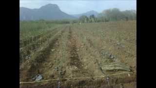 Decoración de Jardinería y Sistema de Riego Automatizado Monterrey México