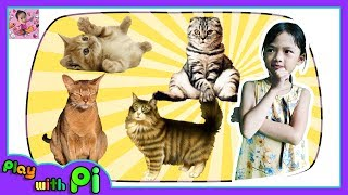Animals for Kids Learn Cats Names and Sound Educational for Kids