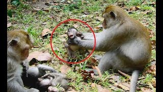 So pity baby! Big monkey strangled baby monkey very strong/Wild Monkey