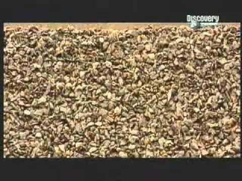 Como pegar manto asfaltico autoadhesivo