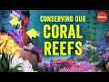Conserving our spectacular, vulnerable coral reefs - Joshua Drew