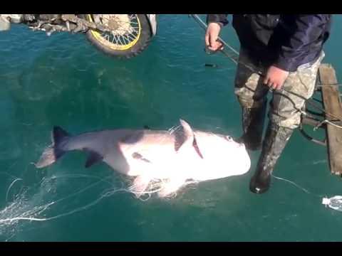капчагай рыбалка на судака