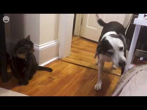 Dogs shall not pass | Cats vs. Dogs Funny Video Compilation