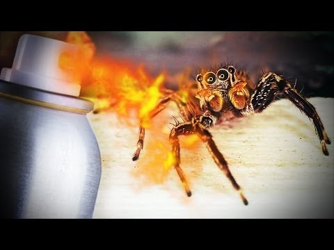 Man Burns House Down Trying To Kill Spider