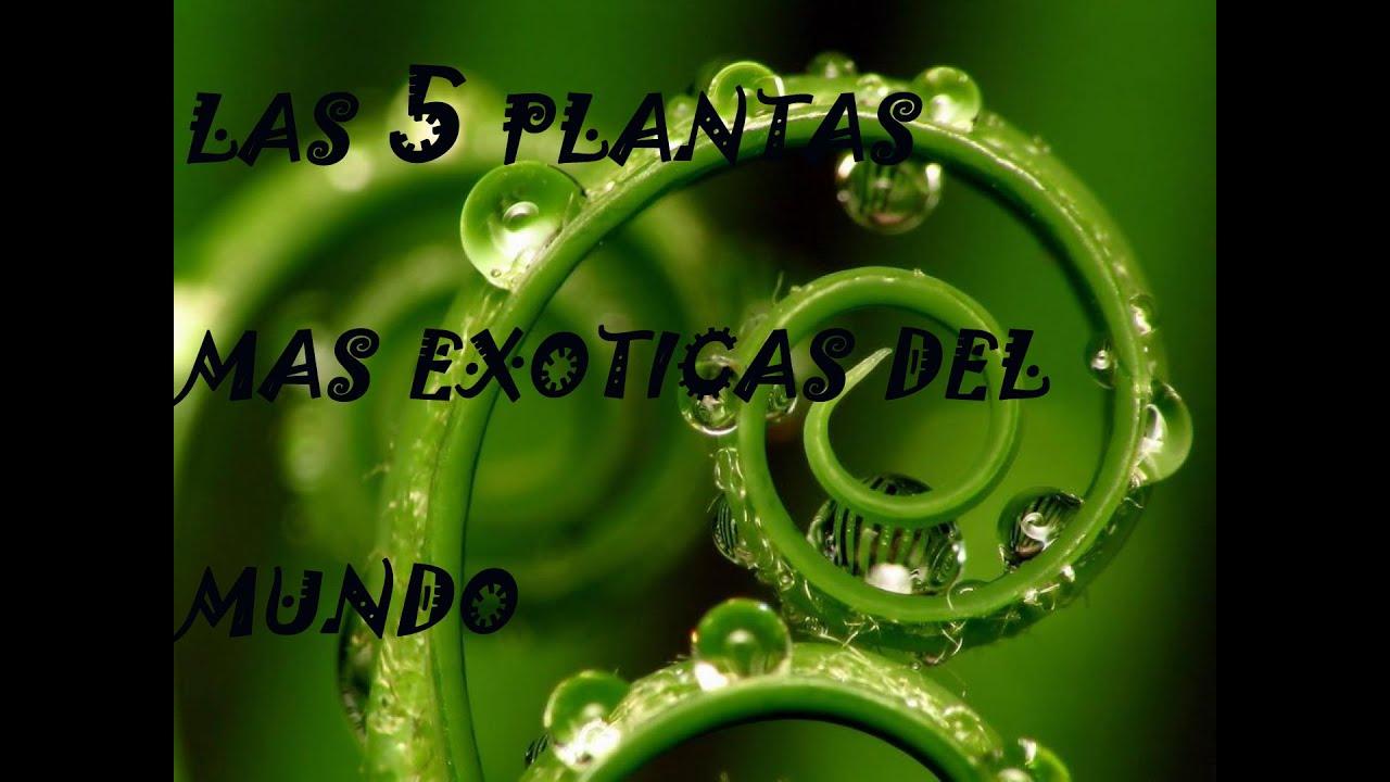 Las 5 plantas mas exoticas del mundo youtube for Plantas exoticas de interior