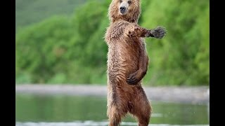 Funny Dancing Animals Compilation
