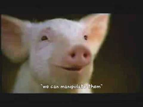 Animal Farm Propaganda Project Music Videos