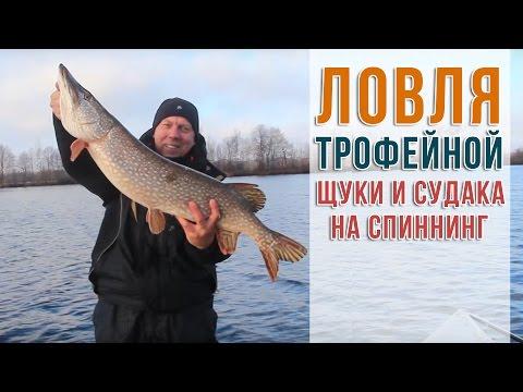 все о рыбалке лов щуки