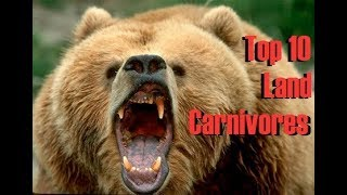 Top 10 Strongest Land Carnivores on Earth