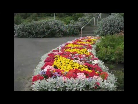 Основные виды цветников – названия и описание