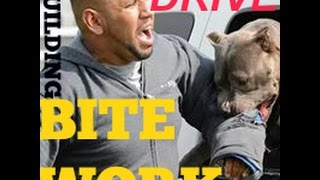 building drive bite work pitbull pit bull guard muscle bully conditioning body building