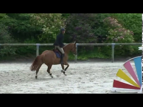 ♥ Quina du Mesnil- jumping horse  by Diamant de Semilly