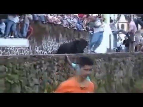 Impresionantes Cojidas de toros con sonidos Graciosos