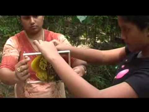 Beekeeping in Sri Lanka Sinhala