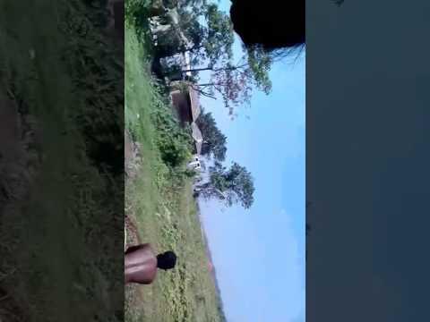 Hindi hd video songa