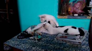 Sister drinks milk from brother