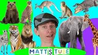 Wild Animals   Matt's Tube #1   Learning Wild and Zoo Animals for Kids