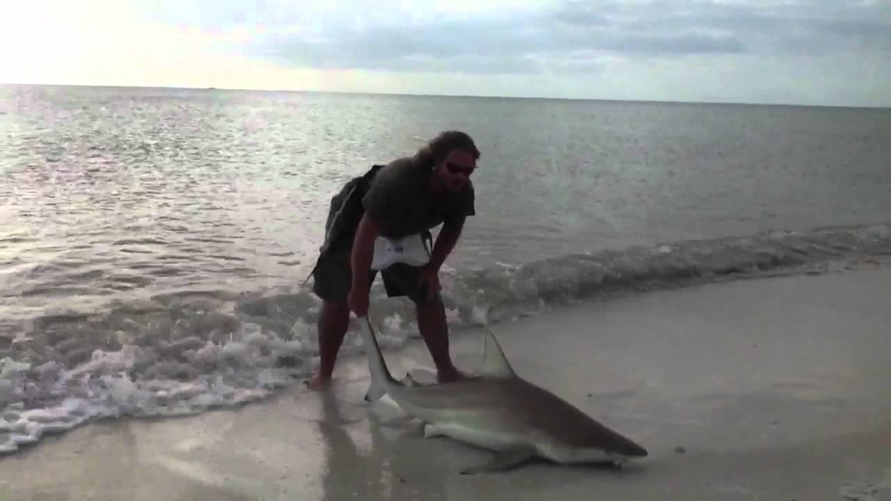 Shark fishing marco island florida 2 youtube for Shark fishing from shore