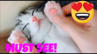 😻😻Must See ! Funny cat videos - Cute Cats and Kittens - Feline Compilation