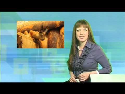 Десна-ТВ: День за днем от 28.01.2016 г.