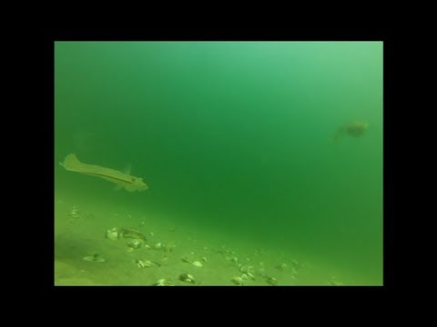 Fishing for Flounder - Watch Them Strike Baits!