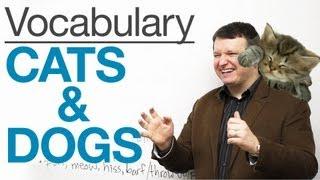 English Vocabulary - CATS & DOGS