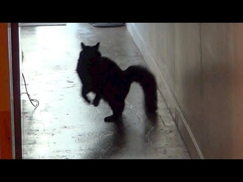 Cat Dressage