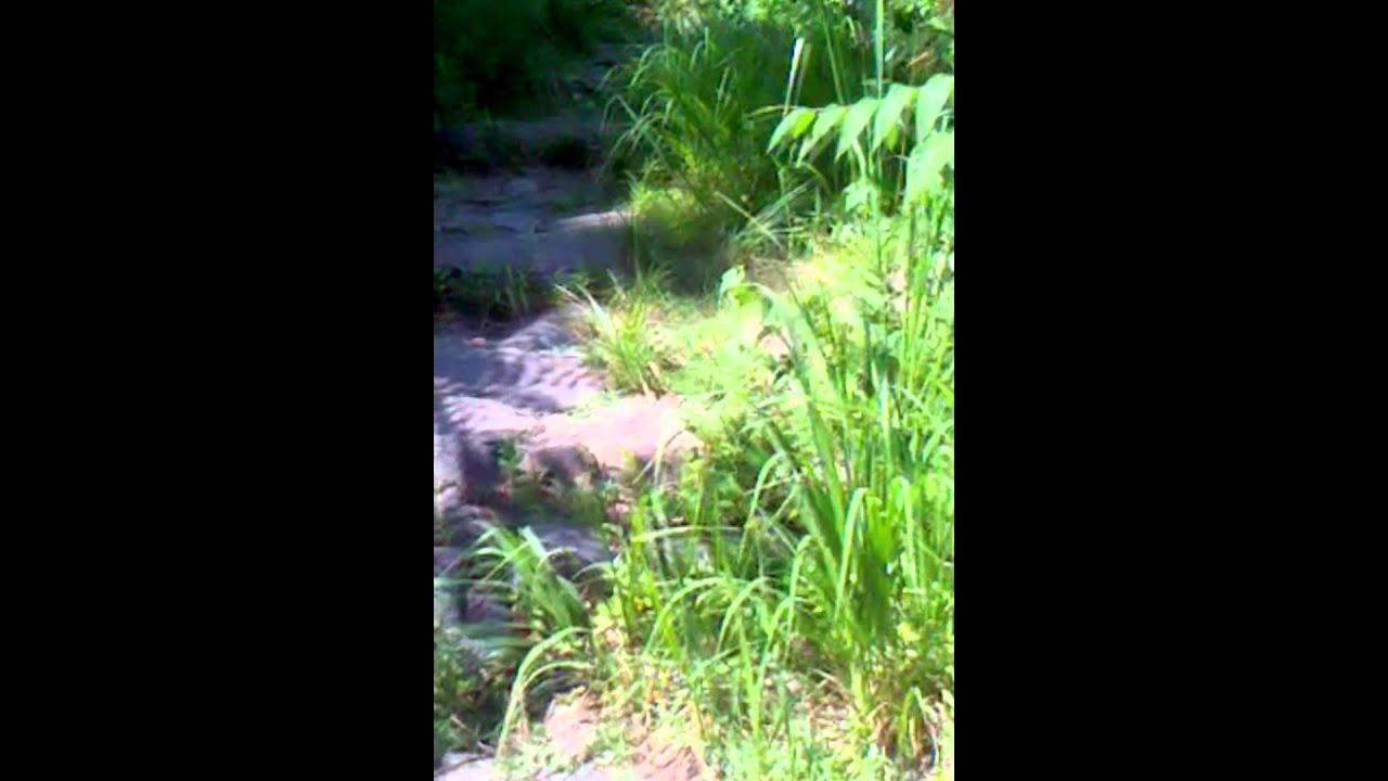 Palisades Trail nj Trail Palisades Interstate
