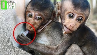 Little baby monkey Lori Jealous and want to get milks from Mum's Jessies