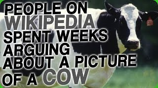 People on Wikipedia Spent Weeks Arguing About a Picture of a Cow
