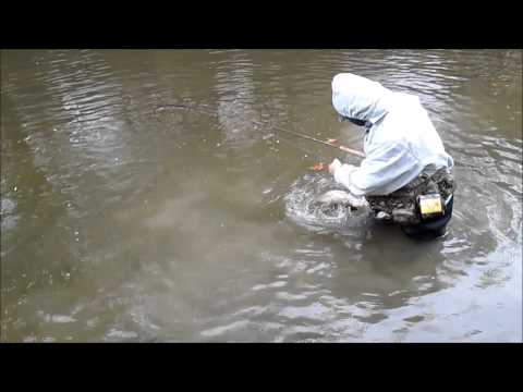 Erie Steelhead Fishing November 2, 2013