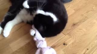 Cat high on catnip