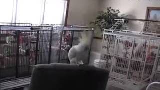 SO FUNNY BIRD !