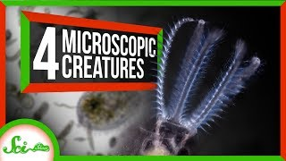 4 Creatures You Can See With Your Own Microscope!