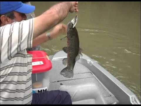 Pesca Dinâmica - Tilápias e traíras na Represa de Salto Santiago no Paraná - Parte - 3
