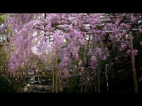 そうだ、京都行こう (春夏) Kyoto Tourism Clips ~Spring and Summer~
