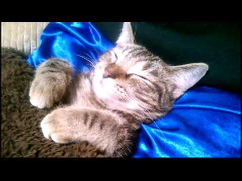 こたつで眠るメッチャ可愛い子猫のこだまちゃん。