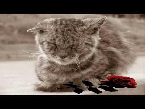 Грустная песня про кота который любил детей