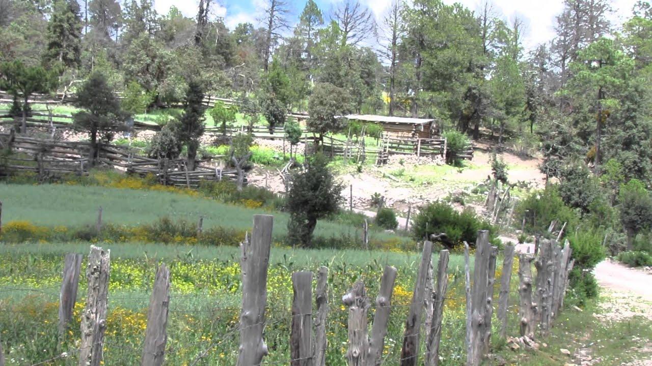Fotos de la sierra de tepehuanes durango 9