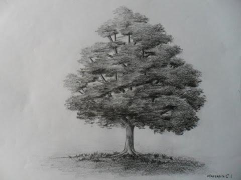 Como dibujar un árbol paso a paso bien fácil. Bases para aprender a dibujar un arbolito clásico.