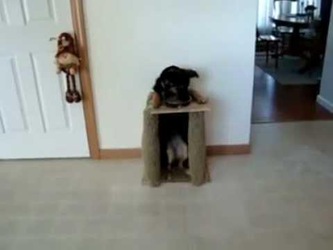 Стол для собаки